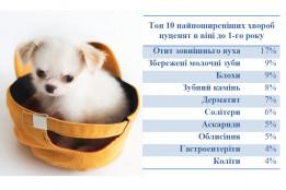 Топ 10 хвороб цуценят в віці до 1-го року